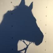 Iroquois's shadow